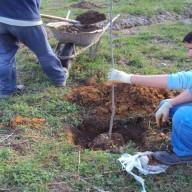 7. Radovi na sadnji drvenastog bilja na fazi I flotacijskog odlagališta 2011. god.