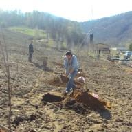 9. Radovi na sadnji drvenastog bilja na fazi III flotacijskog odlagališta 2011. god.