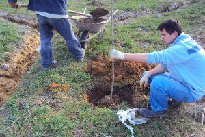 Sadnja drvenastog bilјa