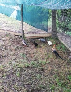Izgradnja staništa za životinje